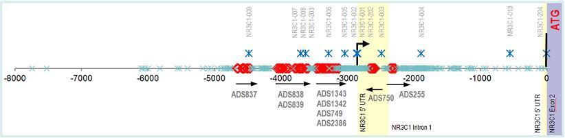 epigendx-gcrcpg_Human GCR NR3C1 chart
