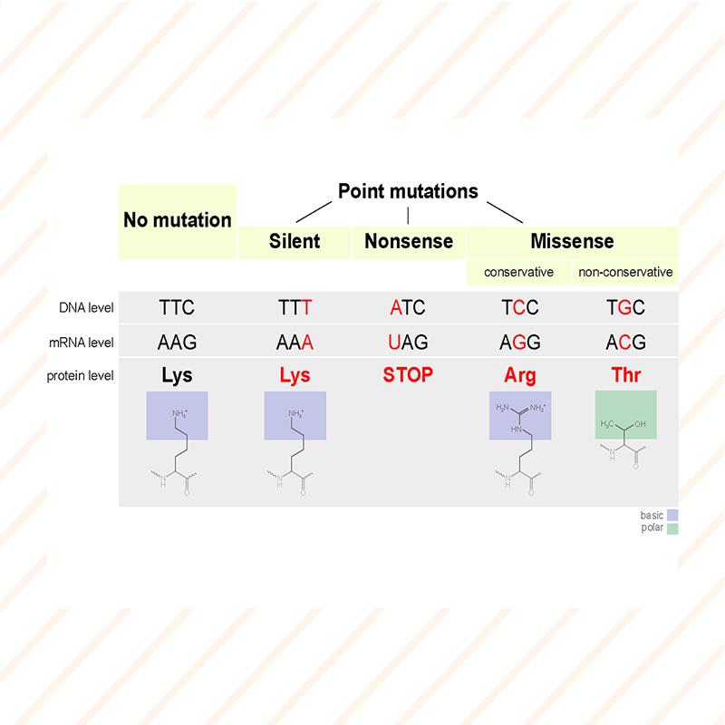 epigendx_Point Mutation-diagram