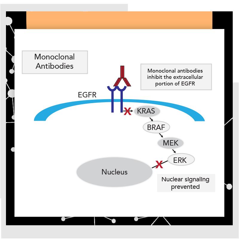 KRAS Mutation Diagram